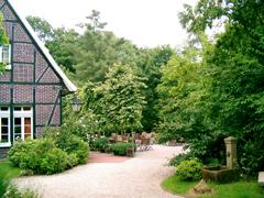 Bild1 - Kastanienbaum